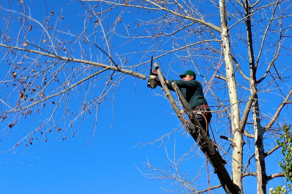 Contact Us-Miami FL Tree Trimming and Stump Grinding Services-We Offer Tree Trimming Services, Tree Removal, Tree Pruning, Tree Cutting, Residential and Commercial Tree Trimming Services, Storm Damage, Emergency Tree Removal, Land Clearing, Tree Companies, Tree Care Service, Stump Grinding, and we're the Best Tree Trimming Company Near You Guaranteed!