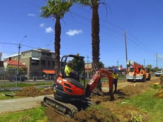 Palm Tree Removal-Miami FL Tree Trimming and Stump Grinding Services-We Offer Tree Trimming Services, Tree Removal, Tree Pruning, Tree Cutting, Residential and Commercial Tree Trimming Services, Storm Damage, Emergency Tree Removal, Land Clearing, Tree Companies, Tree Care Service, Stump Grinding, and we're the Best Tree Trimming Company Near You Guaranteed!