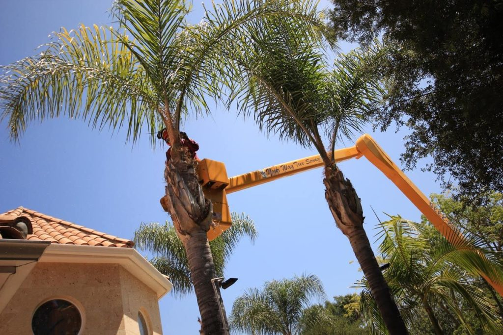 Palm Tree Trimming-Miami FL Tree Trimming and Stump Grinding Services-We Offer Tree Trimming Services, Tree Removal, Tree Pruning, Tree Cutting, Residential and Commercial Tree Trimming Services, Storm Damage, Emergency Tree Removal, Land Clearing, Tree Companies, Tree Care Service, Stump Grinding, and we're the Best Tree Trimming Company Near You Guaranteed!
