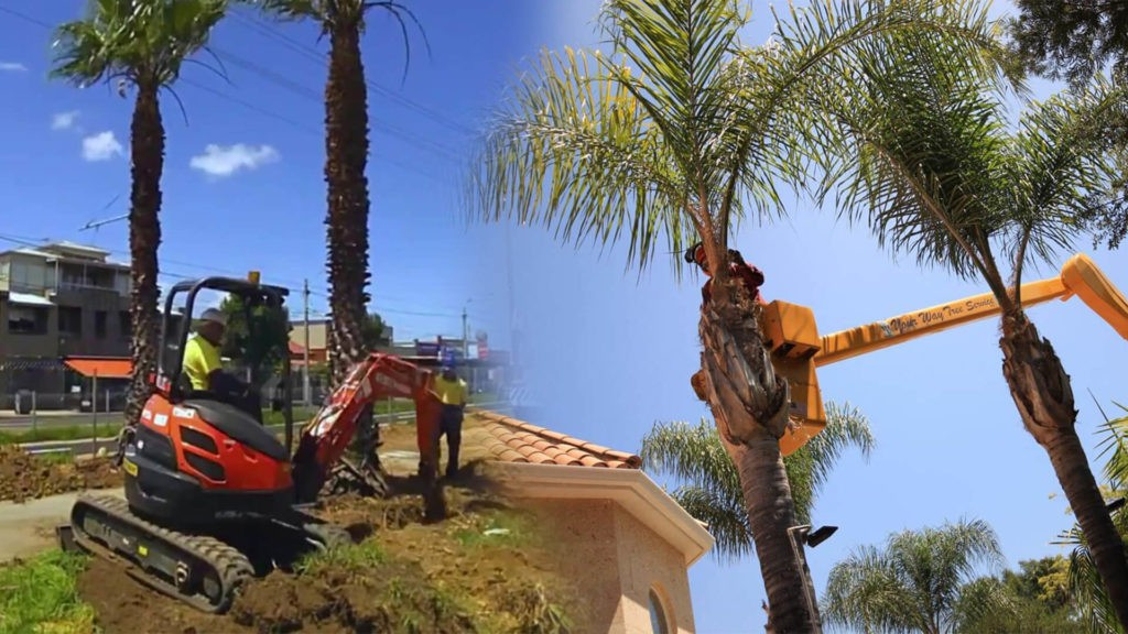 Palm tree trimming & palm tree removal-Miami FL Tree Trimming and Stump Grinding Services-We Offer Tree Trimming Services, Tree Removal, Tree Pruning, Tree Cutting, Residential and Commercial Tree Trimming Services, Storm Damage, Emergency Tree Removal, Land Clearing, Tree Companies, Tree Care Service, Stump Grinding, and we're the Best Tree Trimming Company Near You Guaranteed!