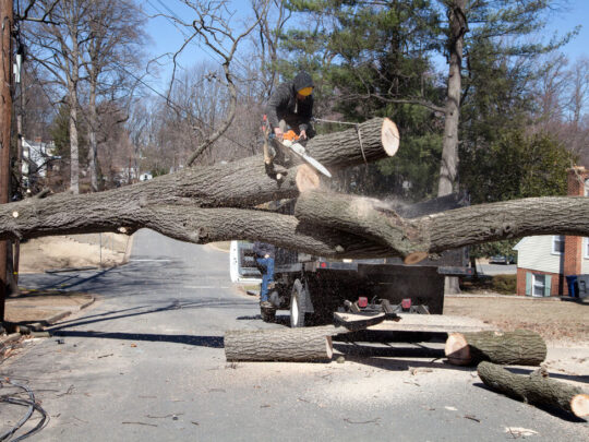 Residential Tree Services-Miami FL Tree Trimming and Stump Grinding Services-We Offer Tree Trimming Services, Tree Removal, Tree Pruning, Tree Cutting, Residential and Commercial Tree Trimming Services, Storm Damage, Emergency Tree Removal, Land Clearing, Tree Companies, Tree Care Service, Stump Grinding, and we're the Best Tree Trimming Company Near You Guaranteed!