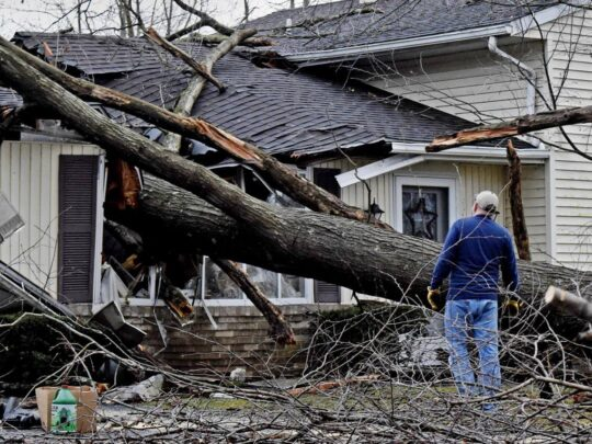 Storm Damage-Miami FL Tree Trimming and Stump Grinding Services-We Offer Tree Trimming Services, Tree Removal, Tree Pruning, Tree Cutting, Residential and Commercial Tree Trimming Services, Storm Damage, Emergency Tree Removal, Land Clearing, Tree Companies, Tree Care Service, Stump Grinding, and we're the Best Tree Trimming Company Near You Guaranteed!