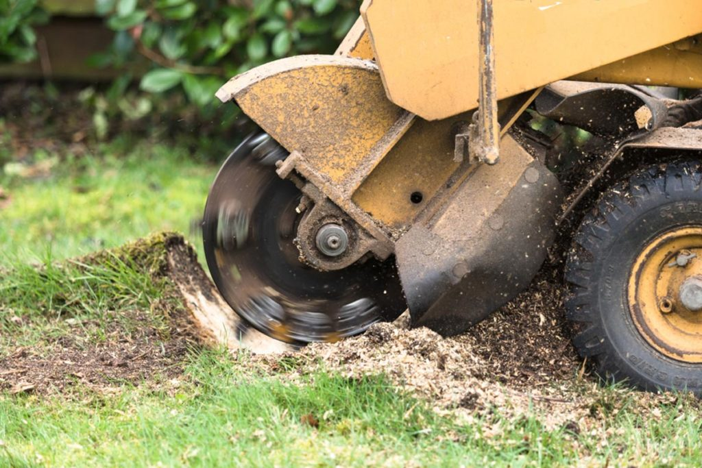 Stump Grinding-Miami FL Tree Trimming and Stump Grinding Services-We Offer Tree Trimming Services, Tree Removal, Tree Pruning, Tree Cutting, Residential and Commercial Tree Trimming Services, Storm Damage, Emergency Tree Removal, Land Clearing, Tree Companies, Tree Care Service, Stump Grinding, and we're the Best Tree Trimming Company Near You Guaranteed!