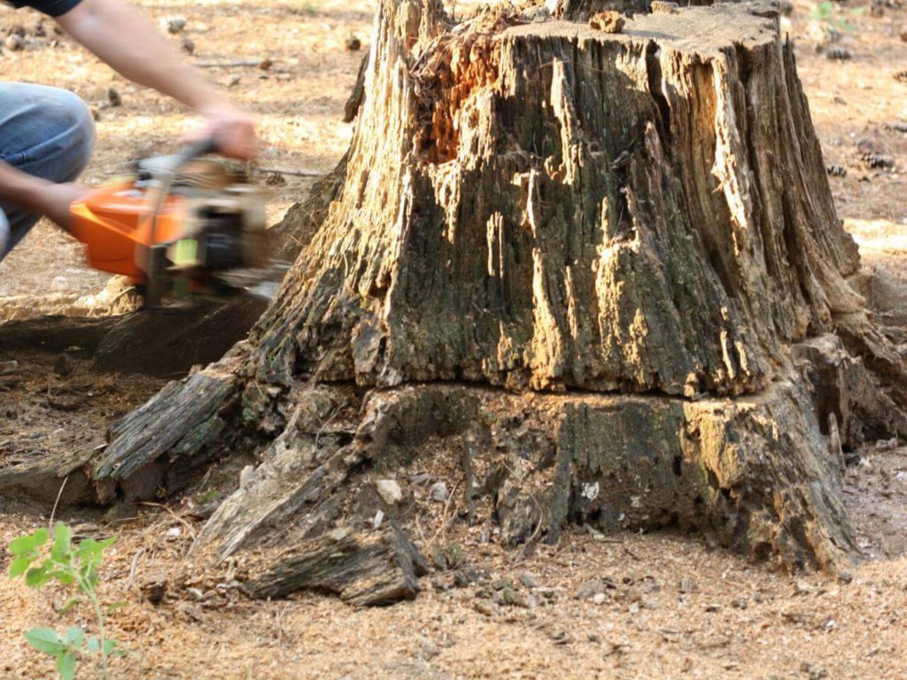 Stump Removal-Miami FL Tree Trimming and Stump Grinding Services-We Offer Tree Trimming Services, Tree Removal, Tree Pruning, Tree Cutting, Residential and Commercial Tree Trimming Services, Storm Damage, Emergency Tree Removal, Land Clearing, Tree Companies, Tree Care Service, Stump Grinding, and we're the Best Tree Trimming Company Near You Guaranteed!
