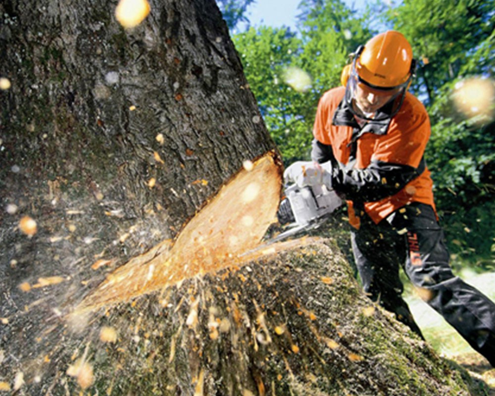 Tree Cutting-Miami FL Tree Trimming and Stump Grinding Services-We Offer Tree Trimming Services, Tree Removal, Tree Pruning, Tree Cutting, Residential and Commercial Tree Trimming Services, Storm Damage, Emergency Tree Removal, Land Clearing, Tree Companies, Tree Care Service, Stump Grinding, and we're the Best Tree Trimming Company Near You Guaranteed!