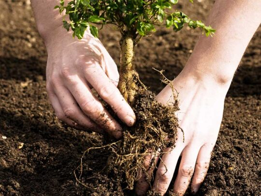 Tree Planting-Miami FL Tree Trimming and Stump Grinding Services-We Offer Tree Trimming Services, Tree Removal, Tree Pruning, Tree Cutting, Residential and Commercial Tree Trimming Services, Storm Damage, Emergency Tree Removal, Land Clearing, Tree Companies, Tree Care Service, Stump Grinding, and we're the Best Tree Trimming Company Near You Guaranteed!