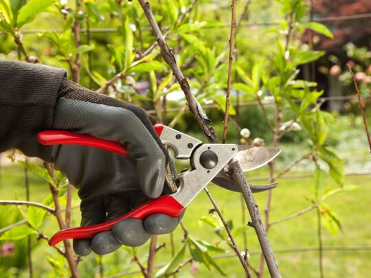 Tree Pruning-Miami FL Tree Trimming and Stump Grinding Services-We Offer Tree Trimming Services, Tree Removal, Tree Pruning, Tree Cutting, Residential and Commercial Tree Trimming Services, Storm Damage, Emergency Tree Removal, Land Clearing, Tree Companies, Tree Care Service, Stump Grinding, and we're the Best Tree Trimming Company Near You Guaranteed!