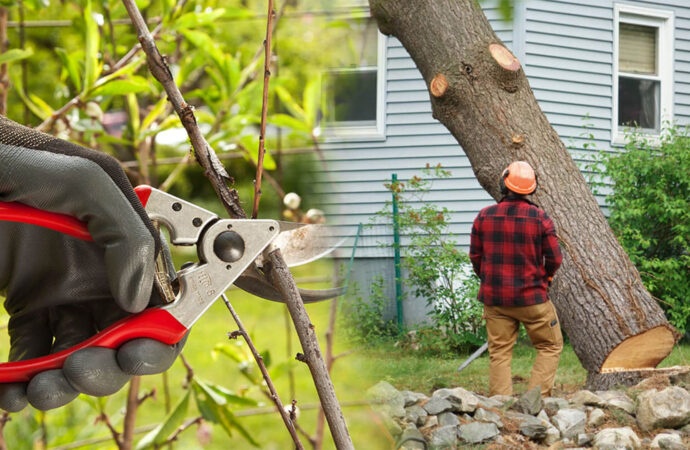 Tree pruning & tree removal-Miami FL Tree Trimming and Stump Grinding Services-We Offer Tree Trimming Services, Tree Removal, Tree Pruning, Tree Cutting, Residential and Commercial Tree Trimming Services, Storm Damage, Emergency Tree Removal, Land Clearing, Tree Companies, Tree Care Service, Stump Grinding, and we're the Best Tree Trimming Company Near You Guaranteed!